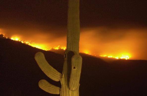 Aspen Tree「Aspen Fire Continues To Burn In Arizona」:写真・画像(4)[壁紙.com]
