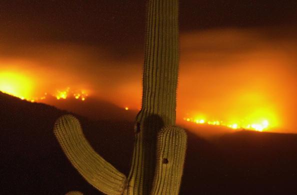 Aspen Tree「Aspen Fire Continues To Burn In Arizona」:写真・画像(5)[壁紙.com]
