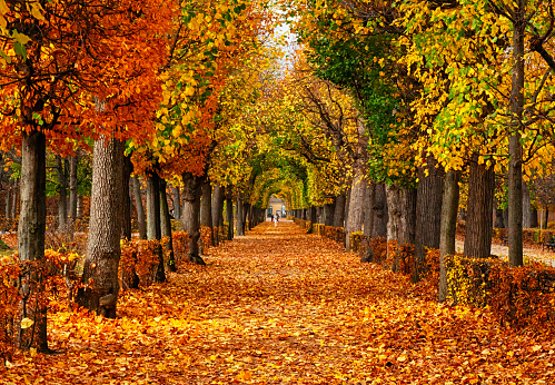 Alley「Empty alley covered by foliage in autumn park, Vienna, Austria」:スマホ壁紙(9)