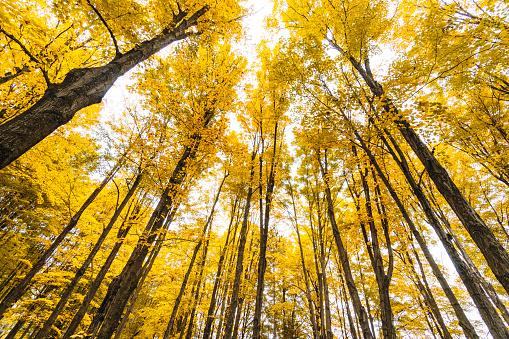 かえでの葉「ニューイングランドの秋の公園」:スマホ壁紙(12)