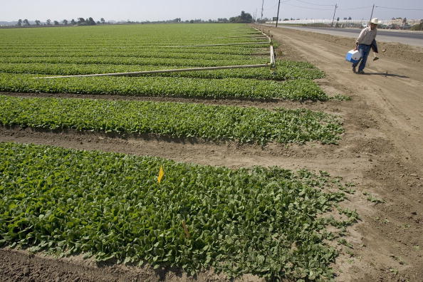 Salad「Spinach Growers Tally Losses As E. Coli Investigation Continues」:写真・画像(9)[壁紙.com]