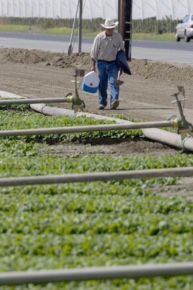 Salad「Spinach Growers Tally Losses As E. Coli Investigation Continues」:写真・画像(3)[壁紙.com]