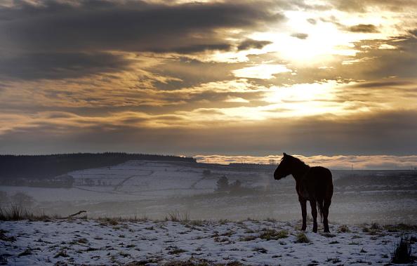 Horse「Freezing Temperatures Continue In Northern Ireland」:写真・画像(16)[壁紙.com]
