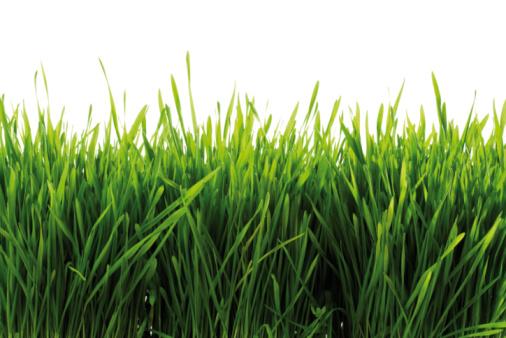 Growth「Grass , close-up」:スマホ壁紙(10)