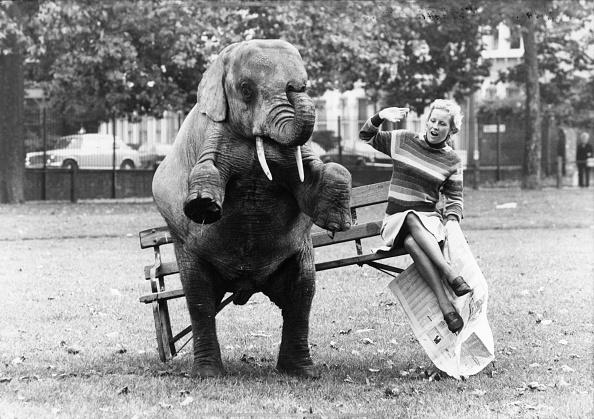 Animal Themes「Elephant Upset」:写真・画像(7)[壁紙.com]