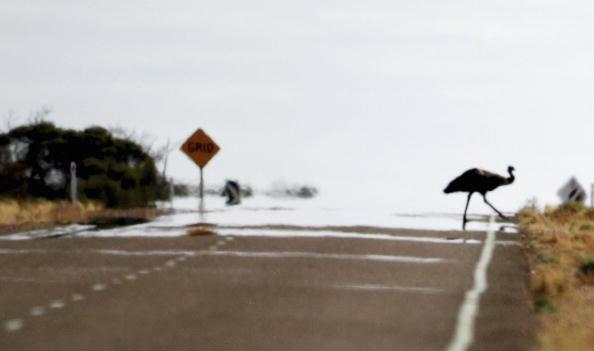 Emu「Explore The Australian Outback」:写真・画像(1)[壁紙.com]