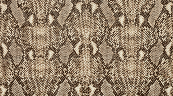 Reptile「Textured background of genuine leather in python skin pattern」:スマホ壁紙(2)