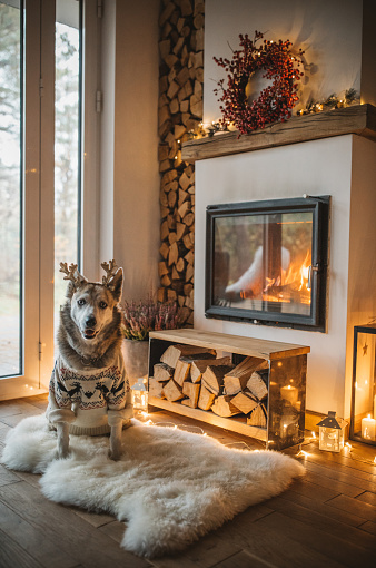 Christmas Lights「Dogs winter day」:スマホ壁紙(7)
