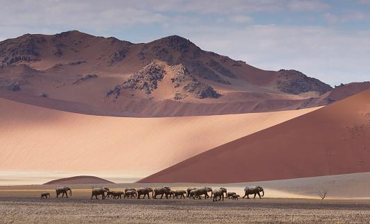 Walking「Herd of elephants crossing desert」:スマホ壁紙(11)