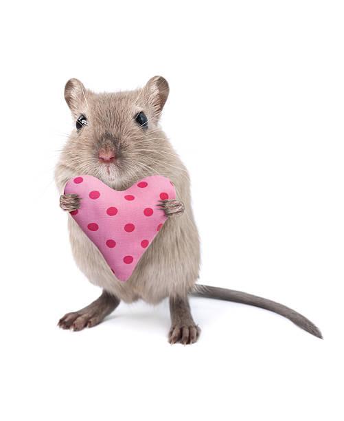 Mouse holding a heart shaped cushion:スマホ壁紙(壁紙.com)