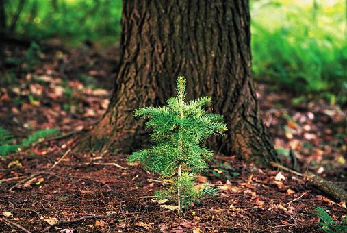 Reforestation「Beginnings」:スマホ壁紙(8)