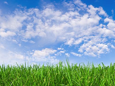 Grass Area「Green Field XXL - 108 Megapixel」:スマホ壁紙(15)