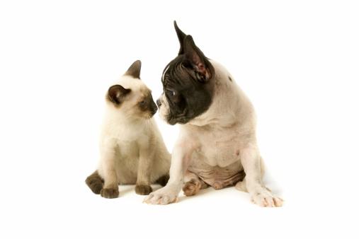 Cat「two buddies」:スマホ壁紙(12)
