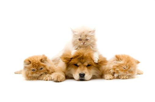 Animal Hair「four friends,」:スマホ壁紙(5)