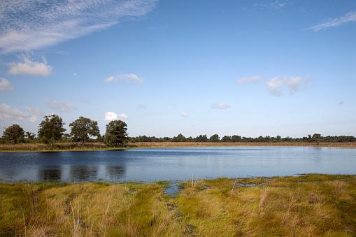 North Brabant「Mere in Dutch heathland reserve Kampina」:スマホ壁紙(3)
