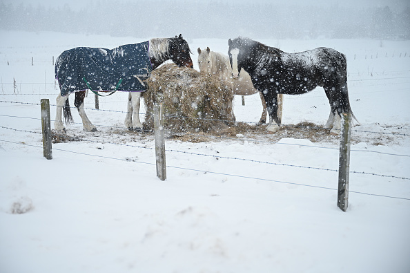 Horse「Big Freeze Brings Snow, Ice and Flooding To The UK」:写真・画像(17)[壁紙.com]
