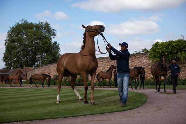Horse「Horse Racing Industry Faces Uncertain Future Post Brexit As Questions Over Irish Border Remain」:写真・画像(11)[壁紙.com]