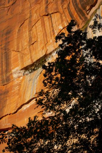 Sedona「Zion National Park」:スマホ壁紙(14)