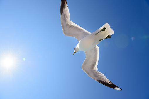 Flock Of Birds「Seagull against blue sky, free as a bird」:スマホ壁紙(5)