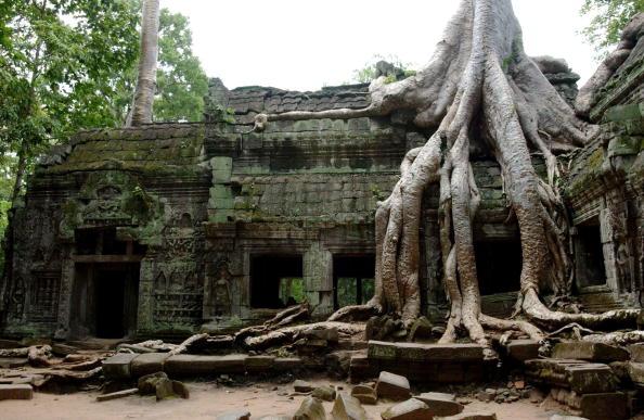 Tree「Angkor Wat in Cambodia」:写真・画像(2)[壁紙.com]