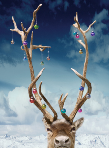 Digital Composite「Reindeer's antlers decorated with baubles, close-up(Digital Composite)」:スマホ壁紙(13)
