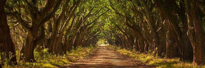Dirt Road「Old country road panoramic in Louisiana USA」:スマホ壁紙(4)
