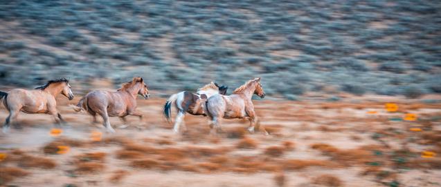 Horse「Horses in the wild」:スマホ壁紙(4)