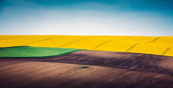 Plowed Field「Multi Colored Panoramic Spring Field」:スマホ壁紙(15)