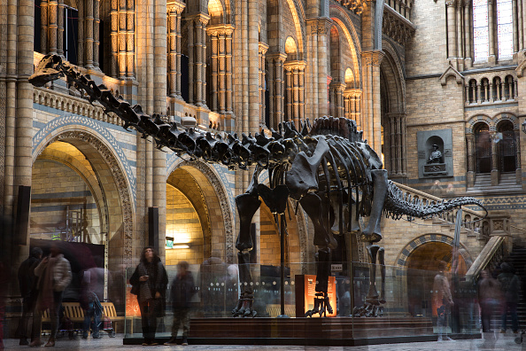 Dinosaur「Last Day At The Museum For Dippy The Diplodicus」:写真・画像(15)[壁紙.com]