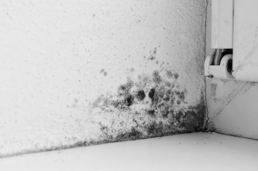 Parasitic「Mouldy corner」:スマホ壁紙(15)