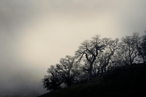 枝「Silhouetted barren tree」:スマホ壁紙(16)