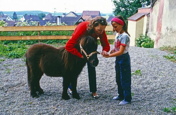 Horse「Von W¸rttemberg」:写真・画像(7)[壁紙.com]