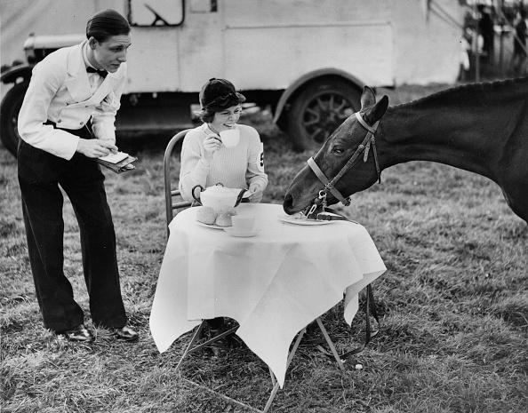 Horse「Tea With A Horse」:写真・画像(9)[壁紙.com]