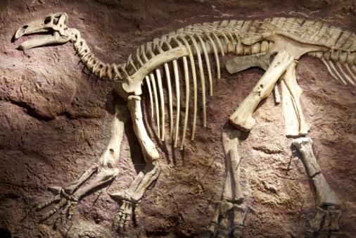 Extinct「Dinosaur skeleton on Isle of Wight, England」:スマホ壁紙(7)