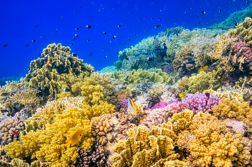 Soft Coral「Beautiful tropical Coral Reef on Red Sea」:スマホ壁紙(14)