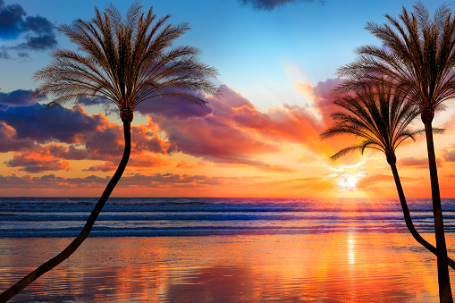 Southern California「Southern California sunset beach with backlit palm trees」:スマホ壁紙(2)