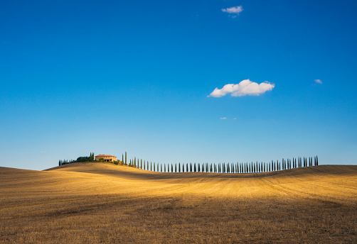 Agricultural Building「Golden field and alley of cypress in Tuscany, Italy」:スマホ壁紙(16)