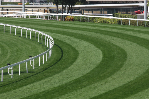 Racehorse「Mowed lawn used as a horse racing track restricted by fence」:スマホ壁紙(1)