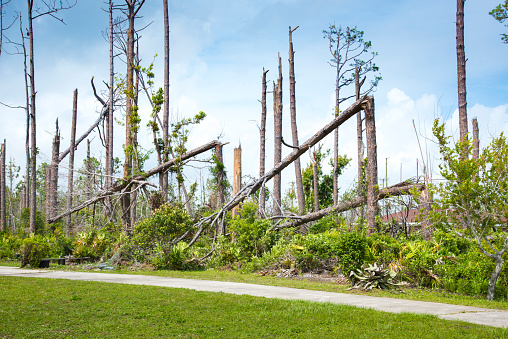Extreme Weather「Hurricane Damage, Pine Trees Snapped In Half From Wind Gusts」:スマホ壁紙(16)