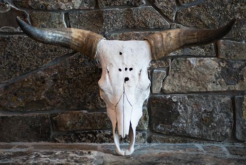 Horned「Cattle skull」:スマホ壁紙(6)