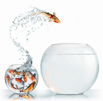 Opportunity「Fish leaping into larger empty bowl」:スマホ壁紙(17)