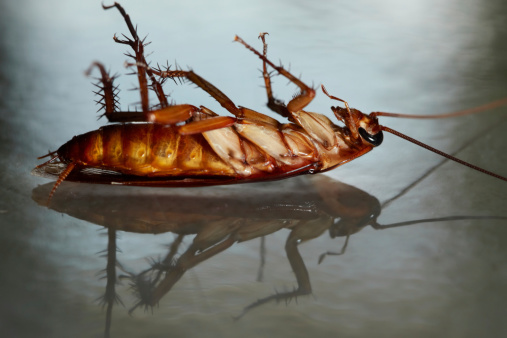 楽園「dead cockroach」:スマホ壁紙(7)