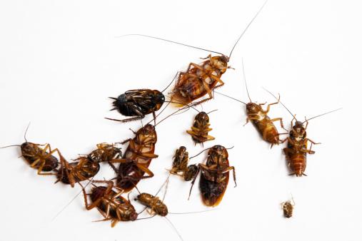 建築「Dead cockroaches」:スマホ壁紙(13)