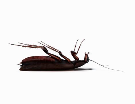 建築「Dead cockroach」:スマホ壁紙(5)