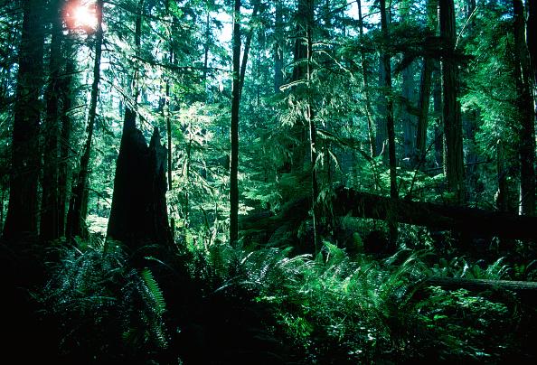 Horror「Macmillan Provincial Park, Canada」:写真・画像(3)[壁紙.com]