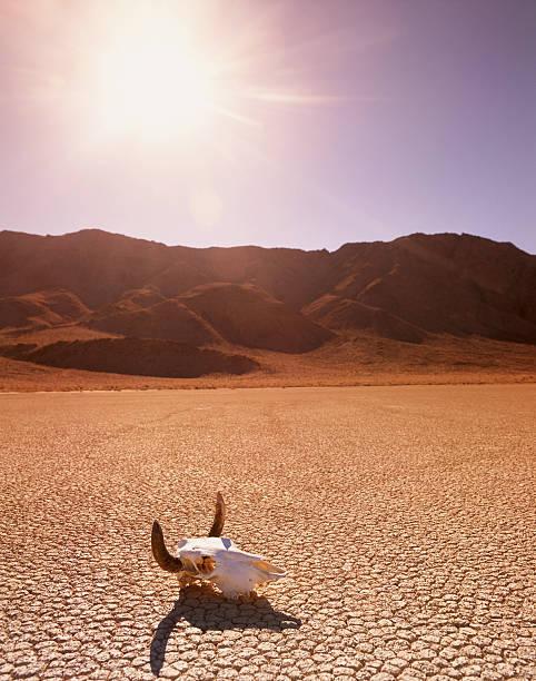 USA, California, Death Valley, cattle skull on the Racetrack Playa:スマホ壁紙(壁紙.com)
