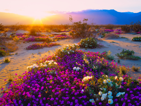 Southern California「California Desert」:スマホ壁紙(16)