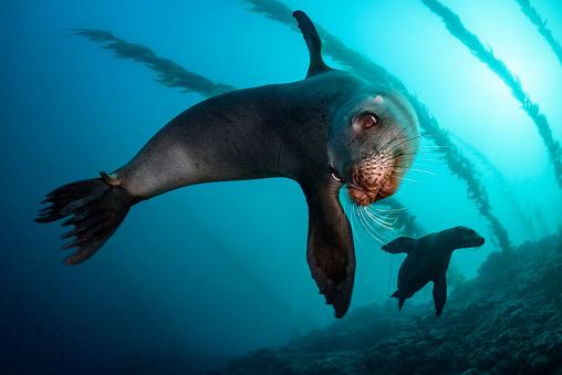 Sea Lion「California Sea Lions」:スマホ壁紙(3)