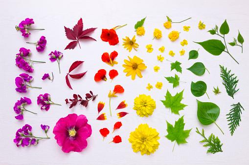 かえでの葉「Preparing blossoms for pressing」:スマホ壁紙(19)