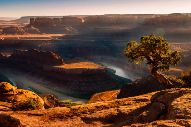 Dead Horse Point over Colorado River and Canyonlands at sunset – Utah, USA:スマホ壁紙(壁紙.com)